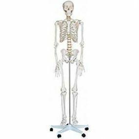 Life Size Skeleton - Deluxe